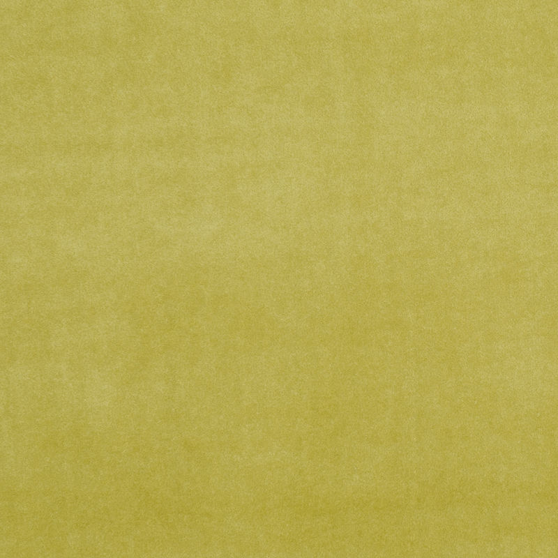 Olive Colour Swatch