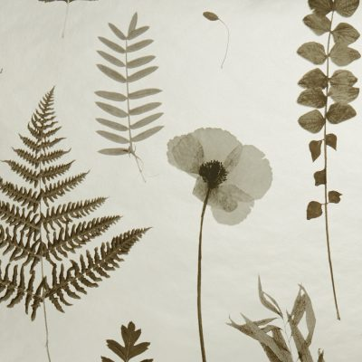 Herbarium Wallpaper by Clarke